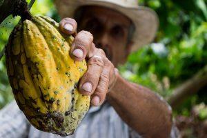 Ghana - kakaové boby