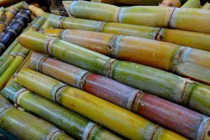 Keňa - cukrová třtina