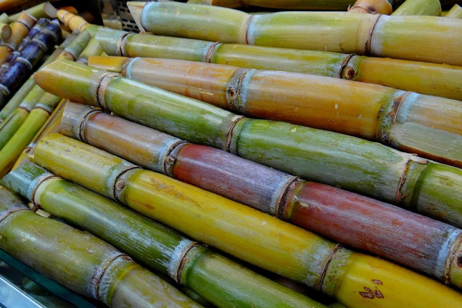 cukrová třtina je součástí rostoucí zemědělské produkce Afriky
